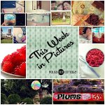 This Week in Pictures, at Polka Dot Cottage