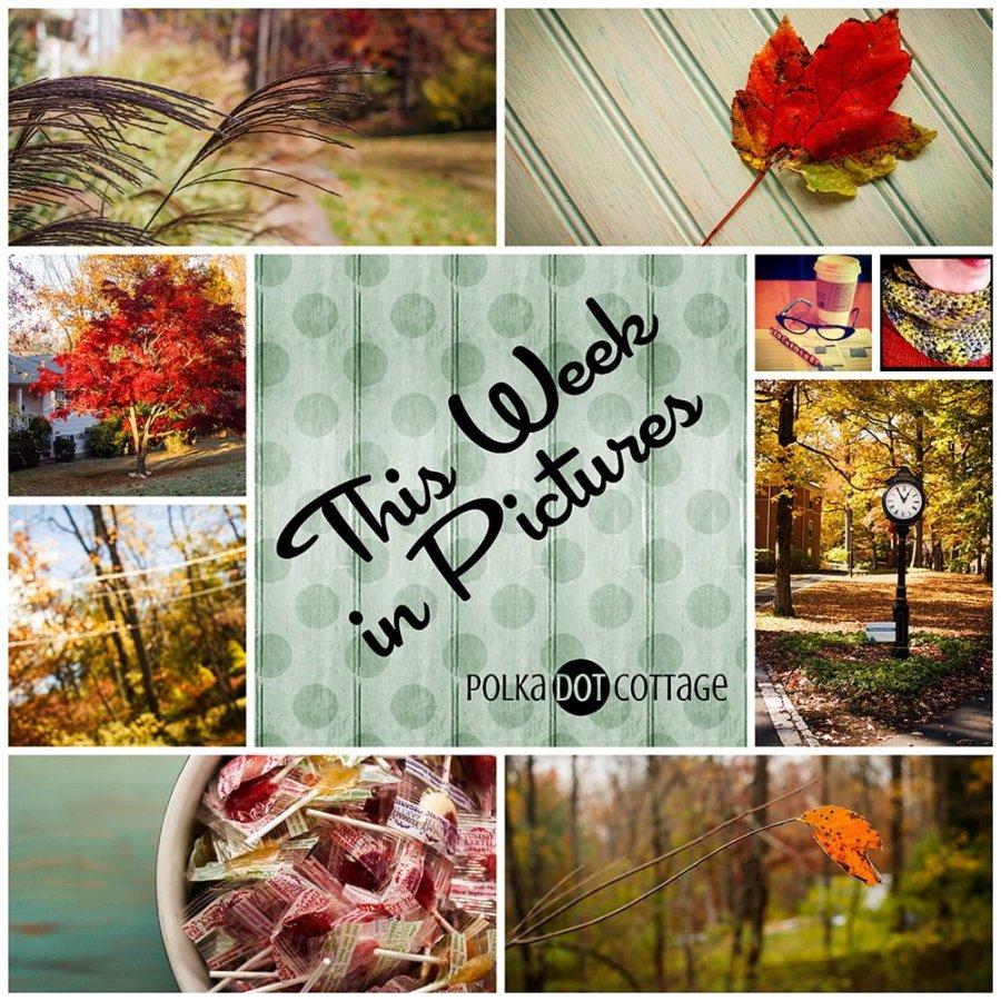 This Week in Pictures, Week 44, 2014