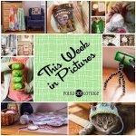 This Week in Pictures, Week 12, 2015