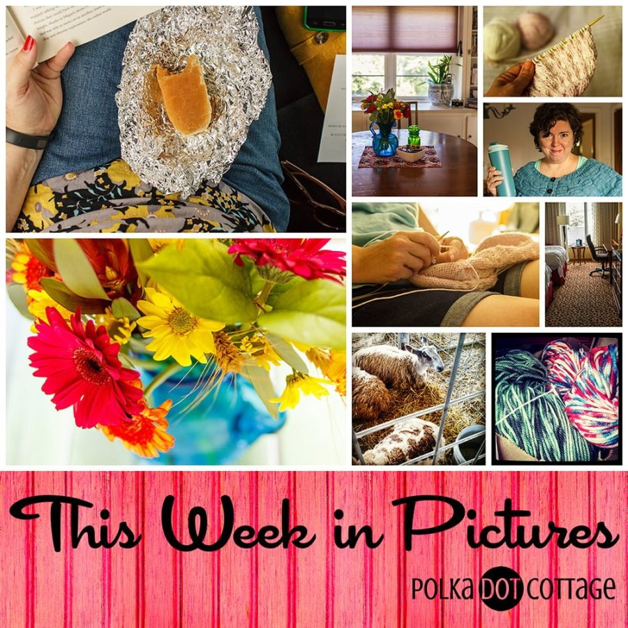 This Week in Pictures, Week 38, 2015