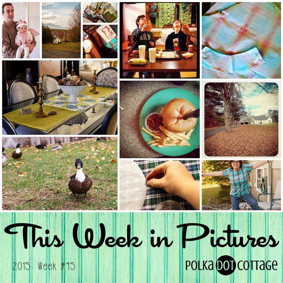 This Week in Pictures, Week 45, 2015