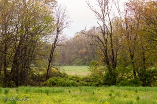"""My sister and I went on a """"Migration Walk"""" run by the Great Swamp Watershed Association this rainy Saturday morning. We took some pictures of birds and flowers, and stepped in a lot of mud. (So. much. mud.) Most of my images were close-ups but I did step back and get a few shots of the scenery, like this one."""