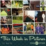 This Week in Pictures, Week 36, 2017