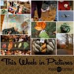 This Week in Pictures, Week 44, 2017