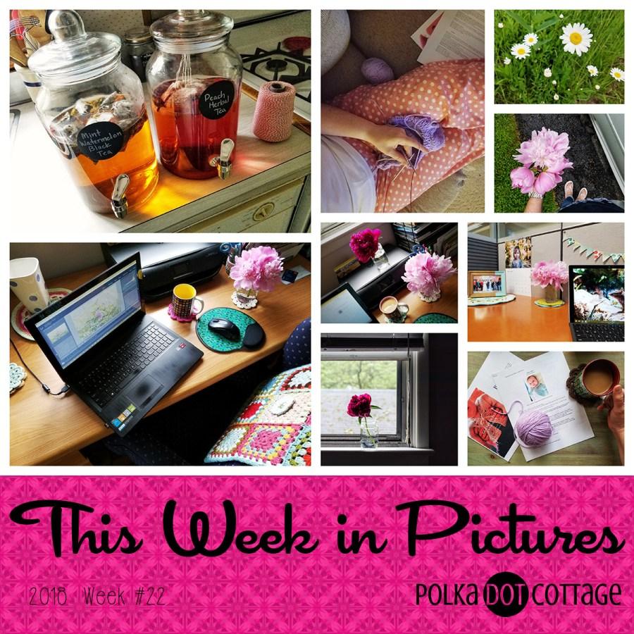 This Week in Pictures, Week 22, 2018