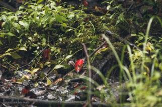 Great Swamp Wildlife Refuge red leaf