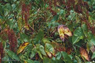 Great Swamp Wildlife Refuge big yellow leaf