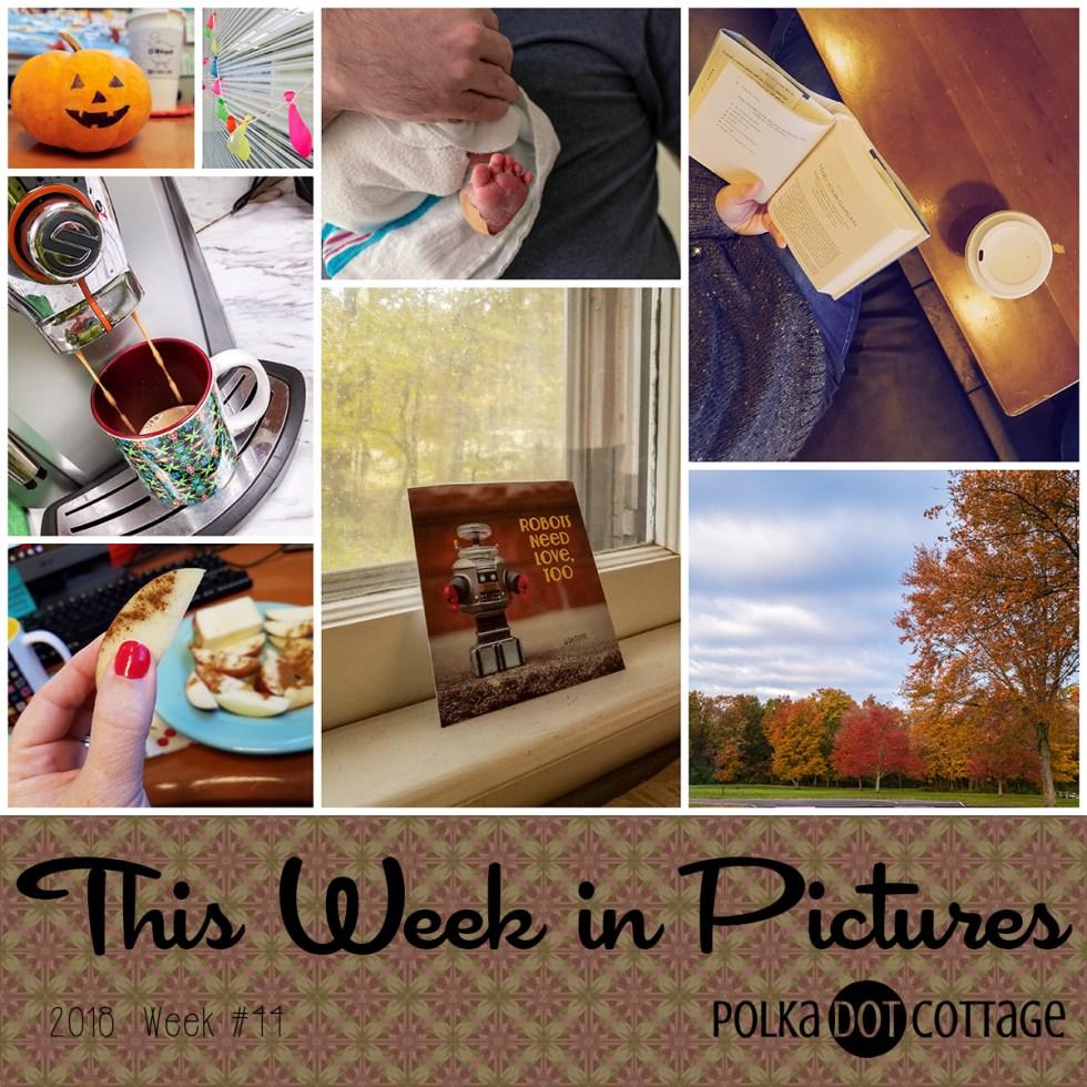 This Week in Pictures, Week 44, 2018