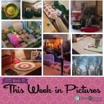 This Week in Pictures, Week 8, 2019