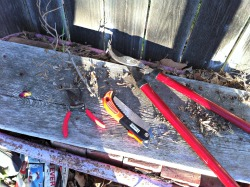 Garden tools pruners, shears