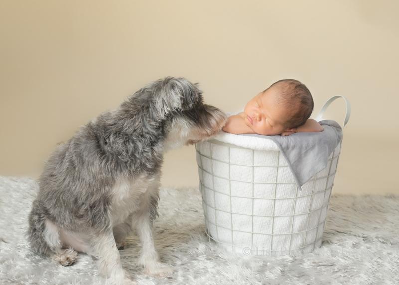 Adorable Newborn Photos with Beloved Pet Dog
