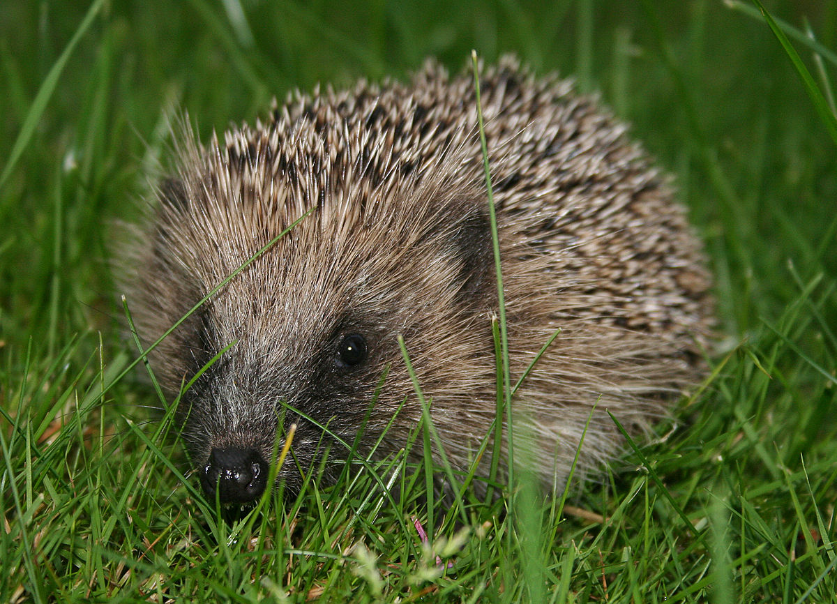 New Psychology Today Post: The Hedgehog's Dilemma