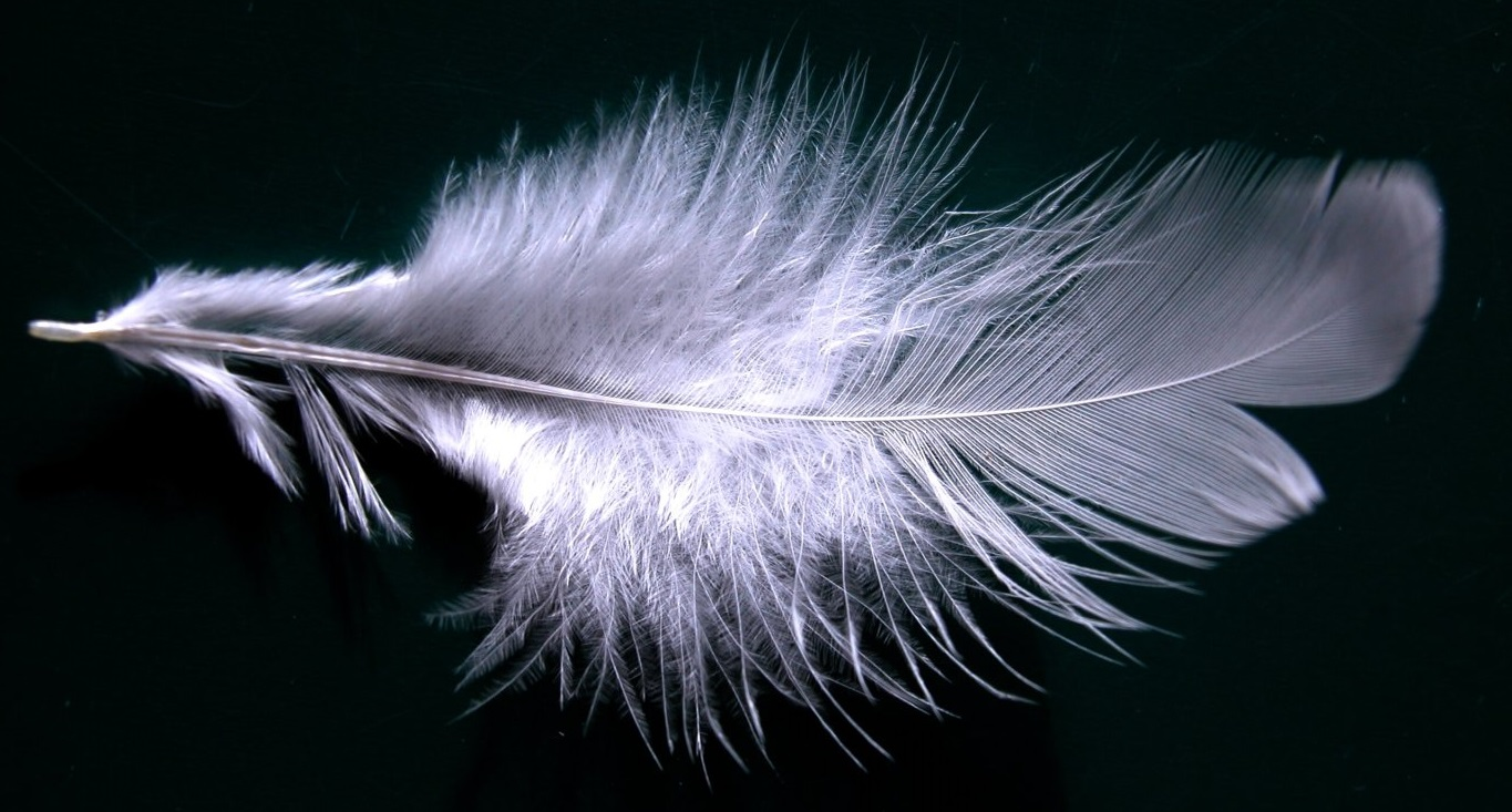 Feathers and Horses