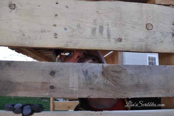 wood-pallet-sheddsc_0015