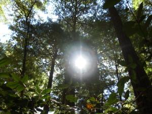 Sunlight through California Trees, photo by Lisa Lindahl