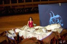 """Arènes des Saintes-Marie-de-la-mer, spectacle """"Harmony"""", juillet 2015"""