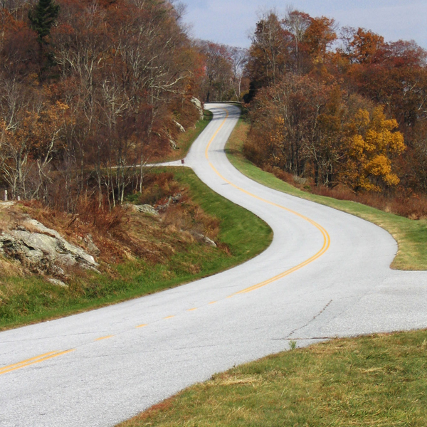Several roads branch into the foliage, going in different directions. Photo © FreeImages/L. Emerson.