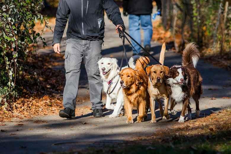 modi per fare soldi a piedi cani