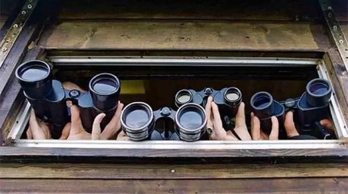 best binoculars for bird watching