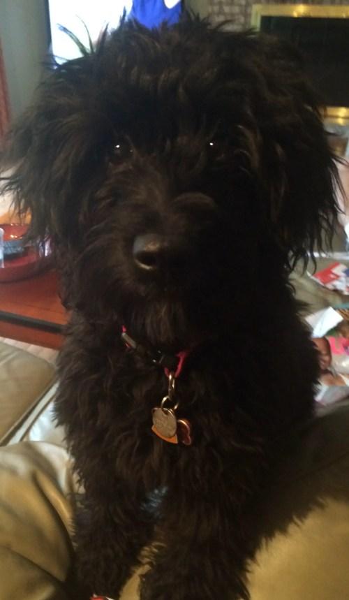 Remy Dog