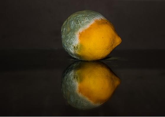 Fruta apodrecendo