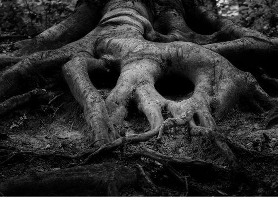 árvore com raízes que formam uma caveira