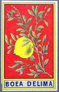 lat1619-kopia