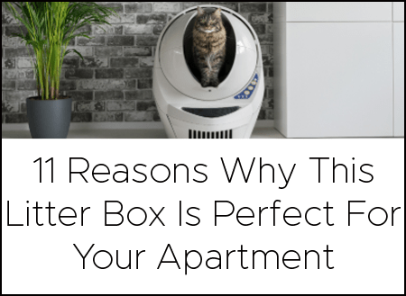 This Litter Box Is Perfect For Your Apartment