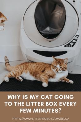 Gato atigrado naranja acostado frente a un Litter-Robot beige: ¿por qué mi gato va a la caja de arena cada pocos minutos?