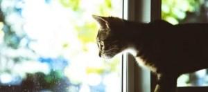 ¿Gatito aburrido?  ¡Pon un comedero de pájaros para gatos!
