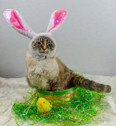 Cat dressed in bunny ears sitting in a basket next to Easter basket grass