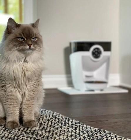 Gato siberiano sentado en una alfombra con alimentador automático de mascotas Feeder-Robot en el fondo: cómo alimentar a un gato durante las vacaciones
