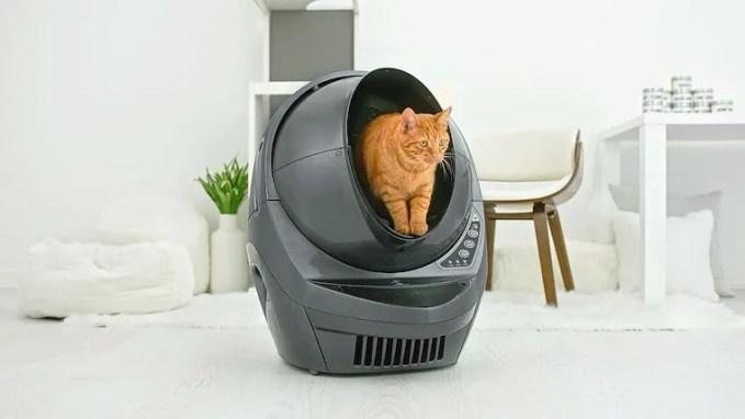 orange tabby cat inside grey Litter-Robot 3 Connect self-cleaning litter box