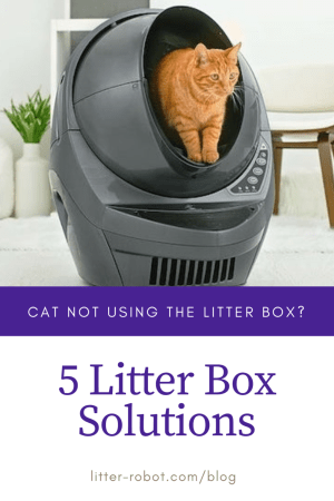 orange cat inside grey Litter-Robot 3 Connect - cat not using the litter box? 5 litter box solutions