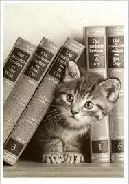 chaton livre littérature enfantine chlop chlopitille
