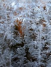 Eisblumen an einer glasscheibe