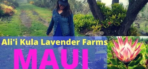 Ali'i Lavender Farm in Maui Hawaii