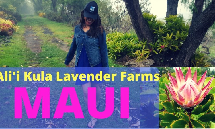 Ali'i Lavender Farm in Maui Hawaii