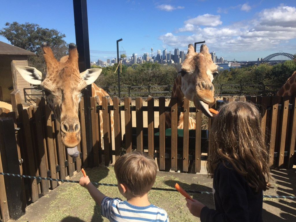 The outstanding Taronga Zoo in Sydney also has some of the best skyline views
