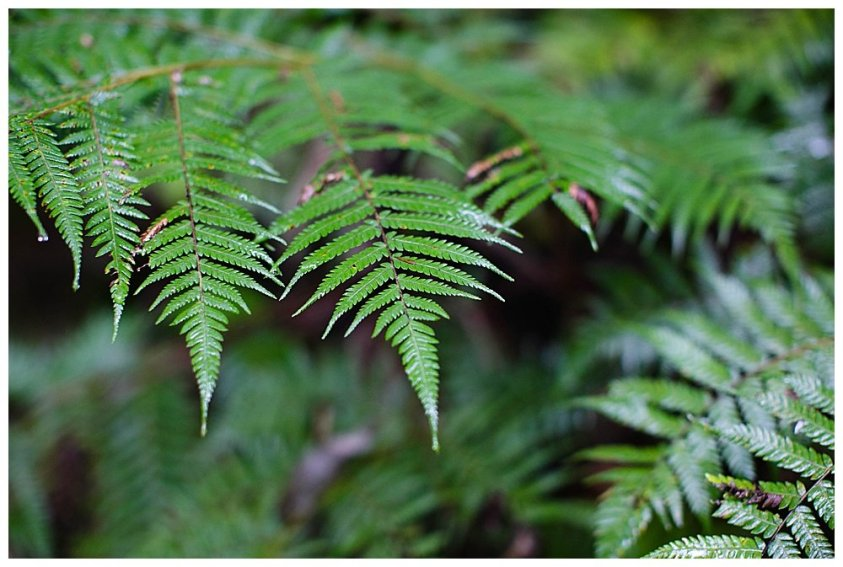 Tree at Coronation Scenic Reserve