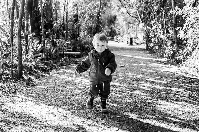 Percy walking through Pukaha National Wildlife Reserve