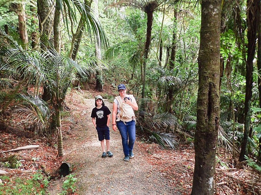 Tilly, Abel, and Apollo hiking in Whanagrei, New Zealalnd.