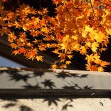 日本東部北部五日紅葉之旅_Autumn leaves, a 5-day trip in North,East Japan