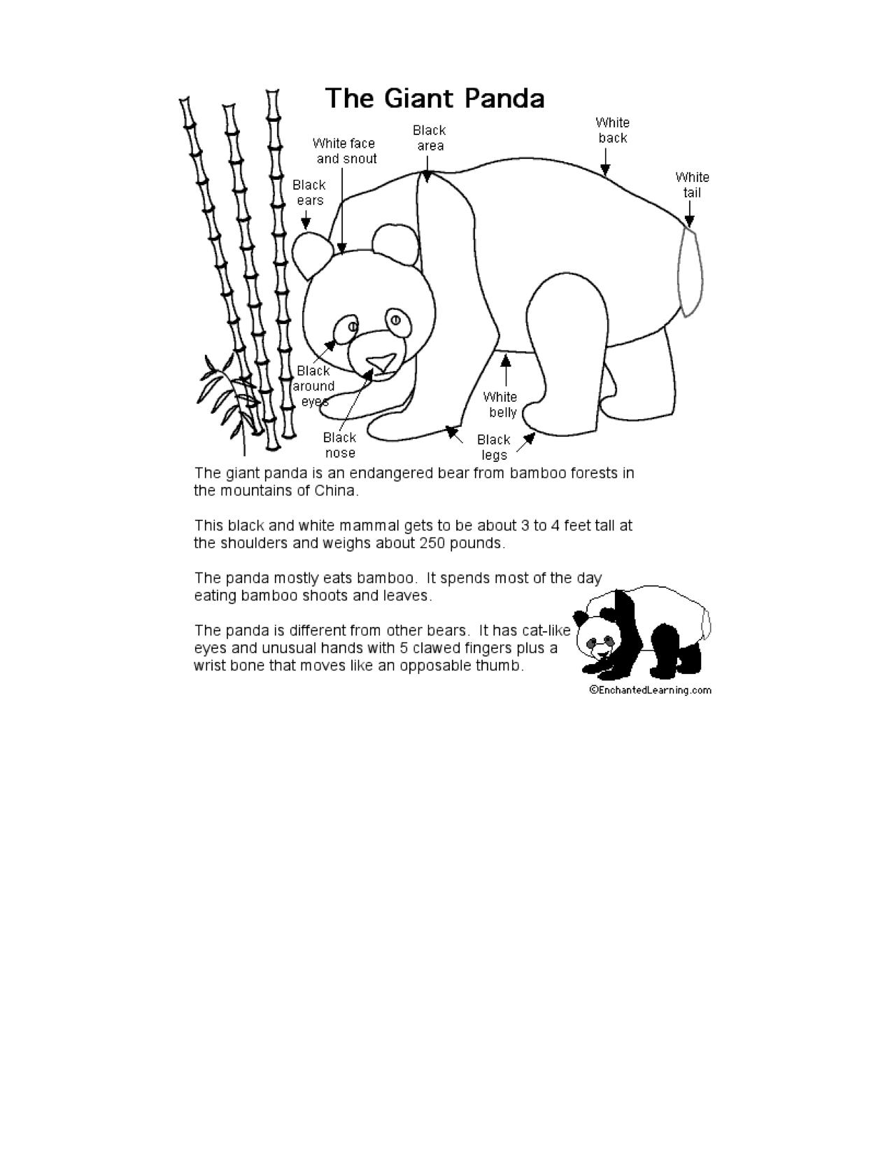 Pandas At Enchantedlearning