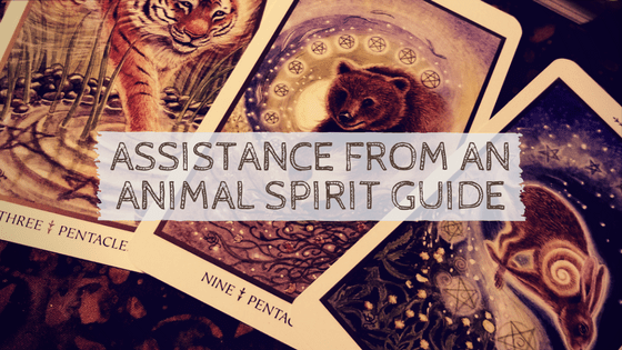 Assistance from an Animal Spirit Guide