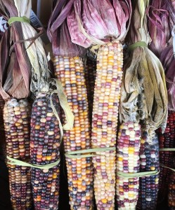 Indian-Corn-at-The-Fresh-Market