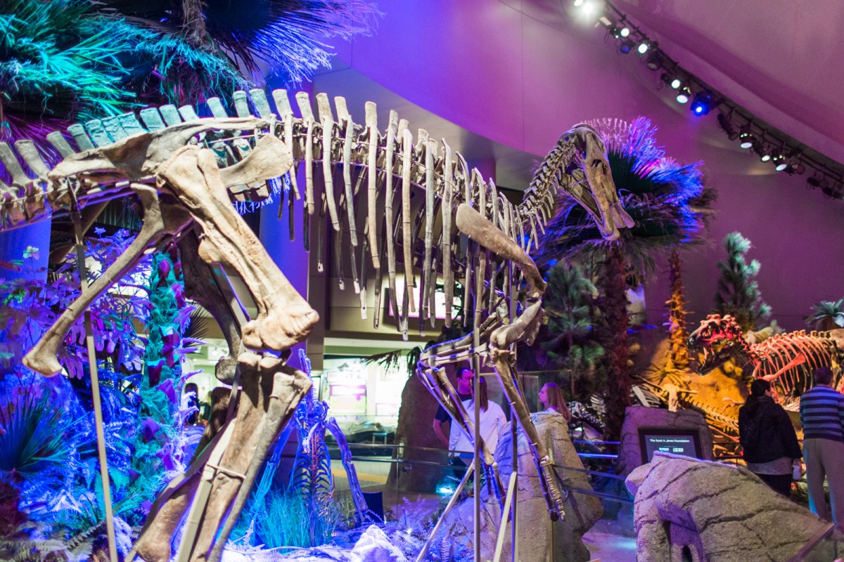 the-childrens-museum-of-indianapolis-dinosaurs-8
