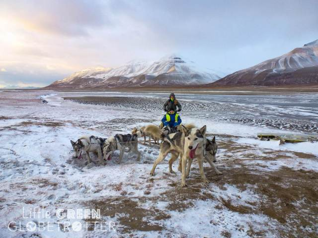 Dog-mushing-sled-cart-svalbard-longyearbyen