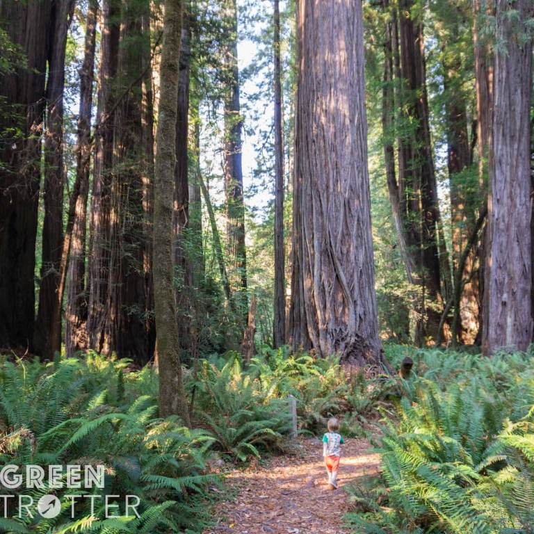 Redwood-National-Park-forest