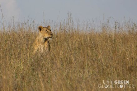 Nairobi-National-Park-lion-Kenya